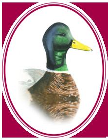 Mallard Insurance - Logo Icon